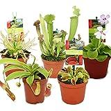 Kit de iniciación de las plantas