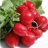 50 Graines semence radis BIO rond rouge graines certifiées fleur/potager