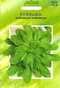 Holländischer breitblättriger Feldsalat (Samen/ Gemüsesamen)
