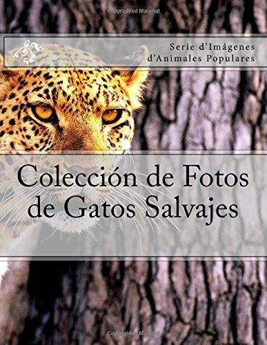 Coleccion de Fotos de Gatos Salvajes: Serie d'Imagenes d'Animales Populares