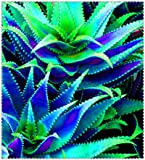 AGROBITS 100pcs Aloe bonsai Mix Houseplants eccellenti Succulente Aloe Vera bonsai Usa bellezza commestibile Cosmetic Bonsai Piante di impianto: 14