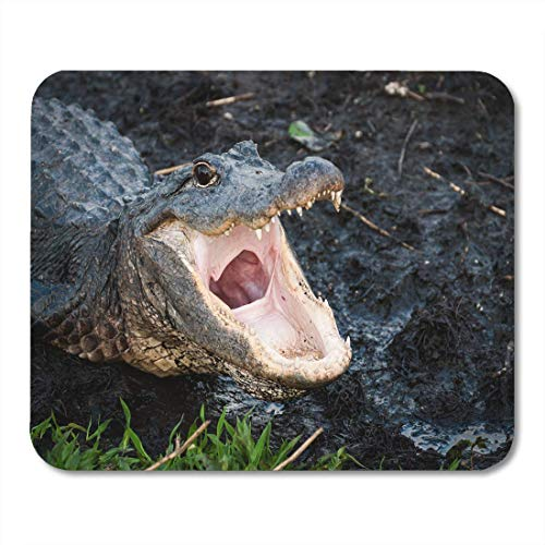 AOHOT Mauspads Pink Gator Alligator Open Wide at Everglades National Park Aliigator Florida Mouse pad 9.5
