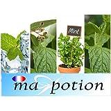 MA-POTION - E-Liquide Lot de 4 saveur MENTHE Fraîche, Eucalyptus, Verte, Naturelle Eliquide Français MA POTION Cigarette électronique, - 10ml, 0mg