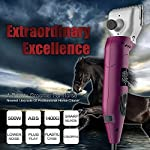 HORCLIP 500W PROFESSIONAL EXTRA HEAVY DUTY HORSE CATTLE CLIPPERS HORCLIP 500W PROFESSIONAL EXTRA HEAVY DUTY HORSE CATTLE CLIPPERS 51eN0bgTCDL