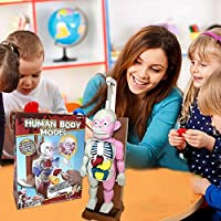 atteryhui Puzzle Assembly Toy Kit, Human Body Model Educational Toys Desktop Game Model for Kids Children supportable