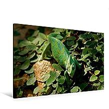 Premium Textil-Leinwand 120 cm x 80 cm quer, Jemenchamäleon   Wandbild, Bild auf Keilrahmen, Fertigbild auf echter Leinwand, Leinwanddruck: Chamäleon und Reptilien (CALVENDO Tiere)