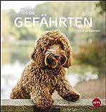 Hunde Postkartenkalender - Treue Gefährten Kalender 2020