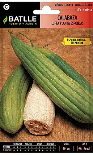 Semillas de luffa vegetal natural
