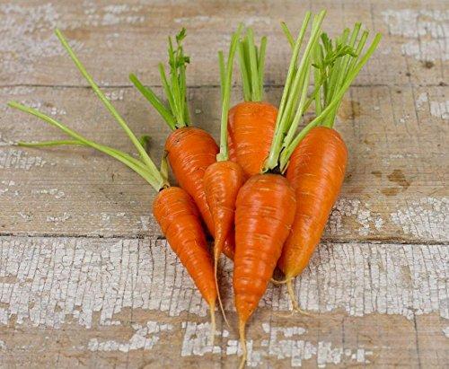 Chantenay à cœur rouge carotte Heirloom Jardin potager non-OGM ~ 300 graines