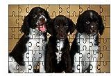 Springer Spaniel Cuccioli (3) Cane 60piece Puzzle usato  Spedito ovunque in Italia