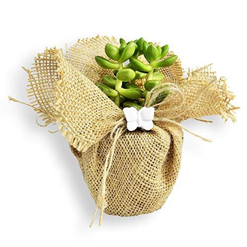 albalù bomboniere piantine grasse vere con vaso e decorazione sacchetto juta e gessetto farfalla (kit 24 pezzi)