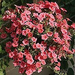 Fash Lady 100 Samen/Tasche Petunia Samen Klettern Petunie Blumensamen Petunia Hybrida Garten Bonsai Pflanze Einfach Zu Wachsen 6