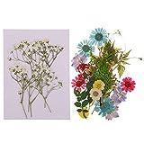 KESOTO 40pcs Natürliche Gepresste Getrocknete Blumen Blatt Kunst Handwerk Machen Lieferung Dekoration