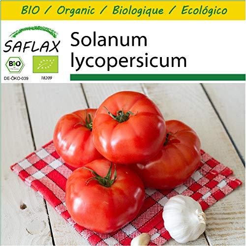 SAFLAX - Anzucht Set - BIO - Tomate - Saint Pierre - 15 Samen - Mit Mini-Gewächshaus, Anzuchtsubstrat und 2 Töpfen - Solanum lycopersicum