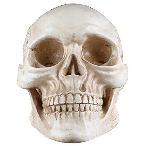 Partydekorationen Lebensgröße Erwachsenen Menschlichen Schädel Kopf Ornament Modell Requisiten (Lebensgroße Halloween Requisiten)