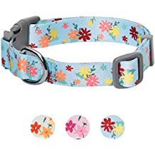 Umi. Essential Made Well Floral Dog Collar in Baby Blue, Small, Neck 30cm-40cm, Adjustable Collars for Dogs