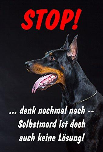 Schild Warnschild Achtung Dobermann - Selbstmord ist doch auch keine Lösung - Hund Hundeschild 30x20cm Hartschaum Aluverbund -S25T