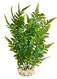 Sydeco Aquariumpflanze Aqua Wild Plant, grün, Höhe 27 cm