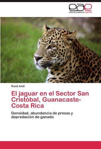 El jaguar en el Sector San Cristóbal, Guanacaste-Costa Rica