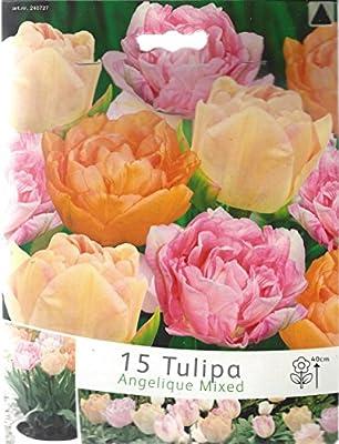 """Duftenden Tulpen Mischung """" Angelique - MIX """" 15 Zwiebeln von Mosselman bei Du und dein Garten"""