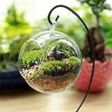 Ocamo Creative Clear Glass Ball Vase Micro Landscape Air Plant Terrarium Succulent Hanging Flowerpot Container