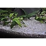 TM Aquatix Aquarium Sand Natural Fish Tank Gravel Plant Substrate (20kg, Light 2-3mm) 6
