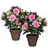 Mica Decorations 950333Lot de 2T Fleurs Artificielles–et plante, hauteur 27Rose azalée en pot Stan, gris/marron