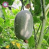 Vista 10 Stück Mini-Samen, Wintermelone (Benincasa hispida) Samen von Lã©Gumes Biologische Wintermelone essbar für Haus Garten Kletterpflanzen