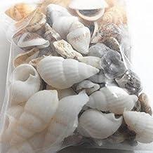 Piezas decorativas para pecera de Meizu88, alrededor de 40 piezas en miniatura, conchas de