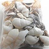 Piezas decorativas para pecera de Meizu88, alrededor de 40 piezas en miniatura, conchas de playa,...