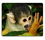 Mousepads Eichhörnchenaffe nach dem Frühstück Bolivien-Matte Kundengebundene Desktop-Laptop-Spiel-Mausunterlage