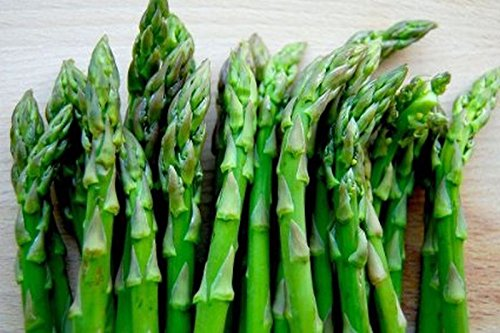10-x-asparagus-crowns-class-top-quality-crowns-ready-to-plant-out