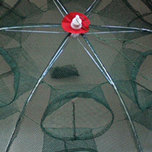 zantec Angeln Net Jagd Tragbarer Automatische gefaltet Net für Fisch Garnelen Minnow Langusten Crab Köder Guss Mesh Trap 4Löchern/6Löchern/8Löcher/12Löchern/16Löchern, grün (Kinder Betta Tank Für)
