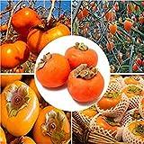 Visa Store Davitu 30 Teile/paket Persimmon Baum Samen Diospyros Kaki Obst Samen Hausgarten Bonsai Pflanzen