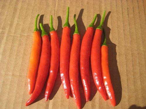 Chili Samen - Thai Hot Culinary - 10 Qualitätssamen - Schärfegrad 6 von 10