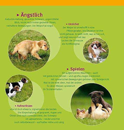 Welpen-Erziehung: Der 8-Wochen-Trainingsplan für Welpen. Plus Junghund-Training vom 5. bis 12. Monat (GU Tier Spezial) - 10