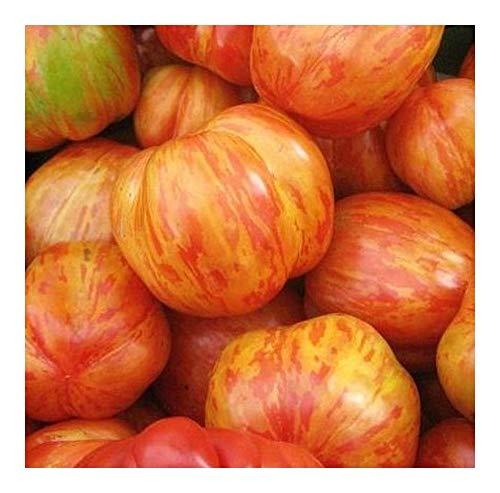 Tomato Tigerella - Tomate Tigerella - 20 Samen