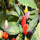 SwansGreen Purple : Rainbow Chili peppers seeds 100pcs Multi color Pepper seeds Interest Mini Garden Home Plant
