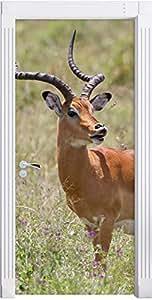 Dorcas gazelle in erba selvatica come Murale, Formato: 200x90cm, telaio della porta, adesivi porta, porta decorazione, autoadesivi del portello