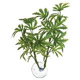 Zoomed Betta Plante Bambou pour Reptile/Amphibien