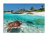 deinebilder24 Leinwand-Bild Einteilig - 40 x 60 cm - Karibisches Meer Wasserschildkröte Mexiko