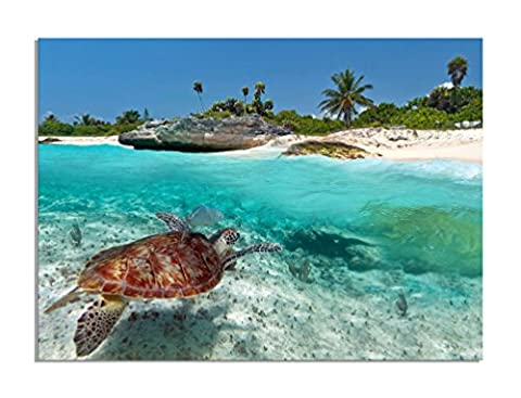 deinebilder24 - Kunstdruck mit Rahmen - 80 x 120 cm - Karibisches Meer Wasserschildkröte Mexiko