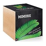 Feel Green Feel Green EcoCube Mimose, Pflanze mit Samen aus ökologischer Edel-Holzbox als Geschenk für Zuhause, Einweihungsgeschenk für Frauen und Männer, Deko Geschenkidee