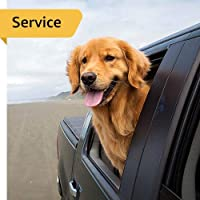 Pet Taxi - Between Emirates - 3 Kittens - Airport Drop off
