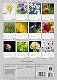 Image de Petales et Etamines 2016: Portraits de Fleurs