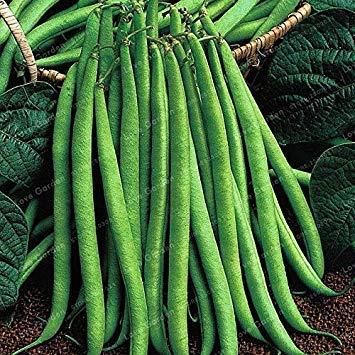 Bean Bonsai Bio-Gemüse Bonsai Phaseolus Vulgaris Pflanze Grüne Bohnen Bonsa natürliches Wachstum Pflanze für Hausgarten-20 PC/Beutel: 6