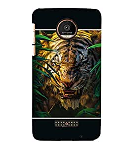 Takkloo tigar wild animal,black background, angry tigar, tigar in woods) Printed Designer Back Case Cover for Motorola Moto Z Force :: Motorola Moto Z Force Droid for USA