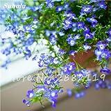 """Schöne Bonsai Weiß Saxifraga """"Frühlings-Schnee"""" Blumensamen von mehrjährigen Garten Die beliebtesten Gewächshäuser Natur Pflanzen 120 Stück 3"""