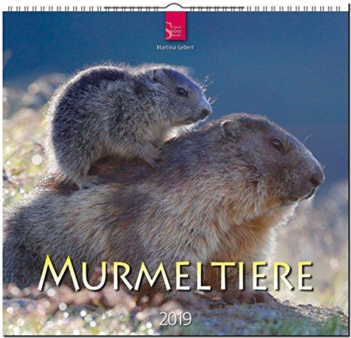 MF-Kalender MURMELTIERE 2019