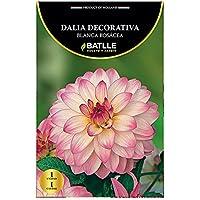 Bulbos - Dalia Decorativa blanca rosacea - Batlle